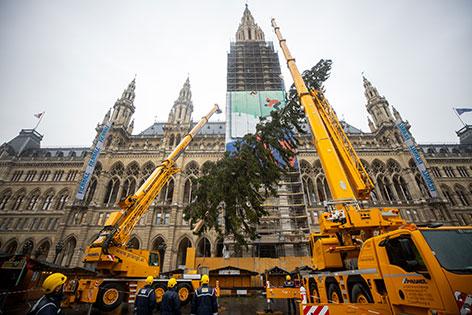 Christbaum in Wien aufgestellt