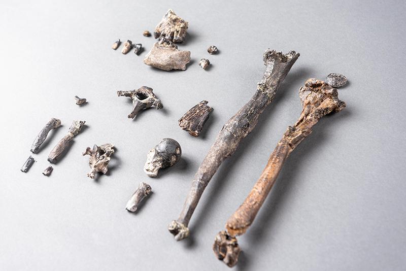 """Fossilien aus der Tongrube """"Hammerschmiede"""" im Unterallgäu"""