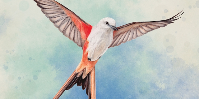 "Cover des Spiels ""Flügelschlag"" mit Vogel"