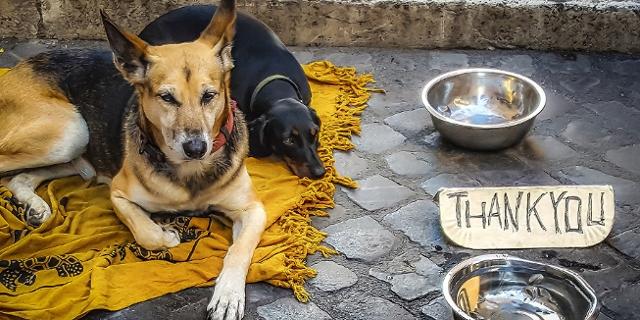 Hunde und Schild eines Bettlers