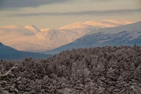 Skandinavien - Europas wilder Norden   das reich der moschusochsen