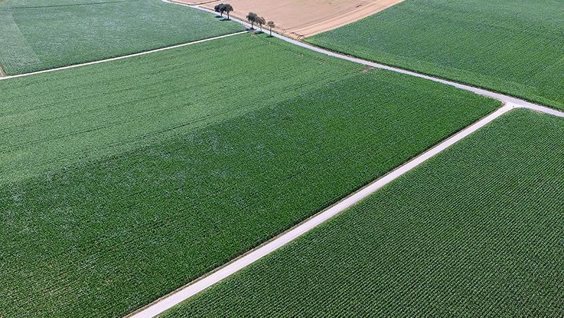 Maisfeld aus der Vogelperspektive