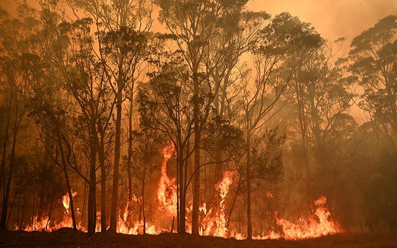 Buschbrand nahe der Stadt Moruya