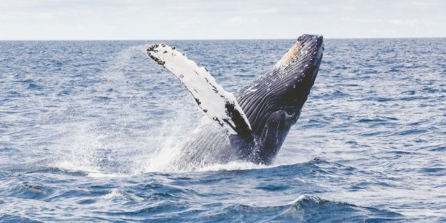 Wale und Plankton
