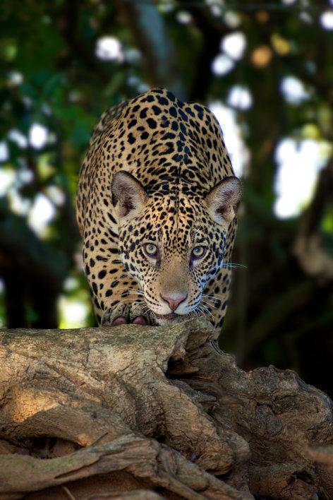 Brasilien - Land der Extreme    Originaltitel: Wild Brazil
