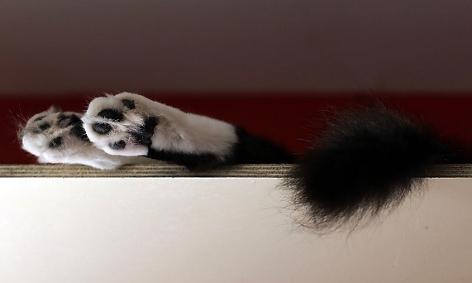 Katze ruht sich auf einem Regal aus