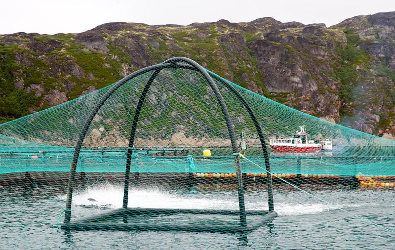 Fischfarm für Lachse und Forellen in Russland