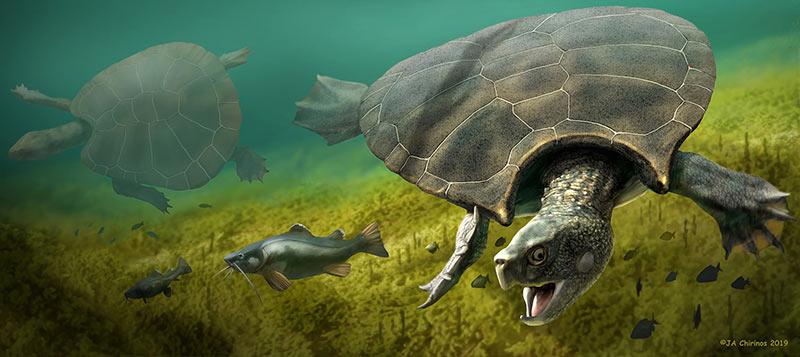 Künstlerische Rekonstruktion der Riesenschildkröte Stupendemys geographicus