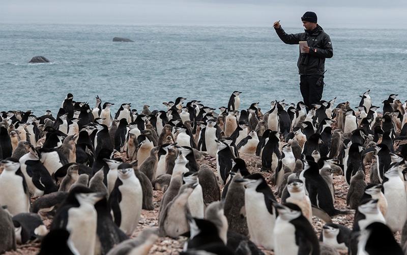 Greenpeace-Forscher bei der Pinguinzählung