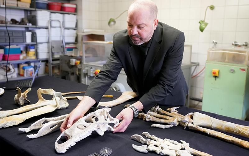 Mathias Harzhauser mit Überresten des Plateosaurus