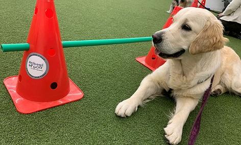 Hund in der Hundeschule