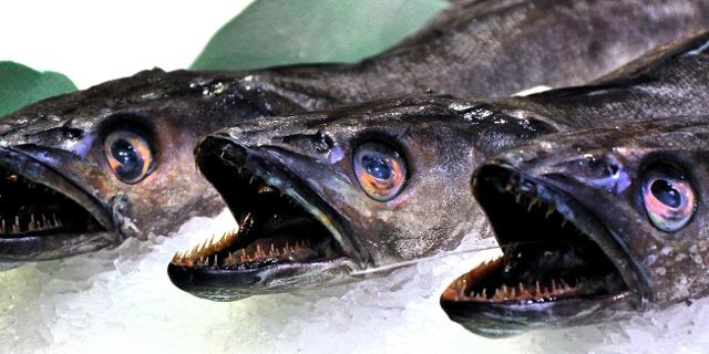 Fische am Marktstand