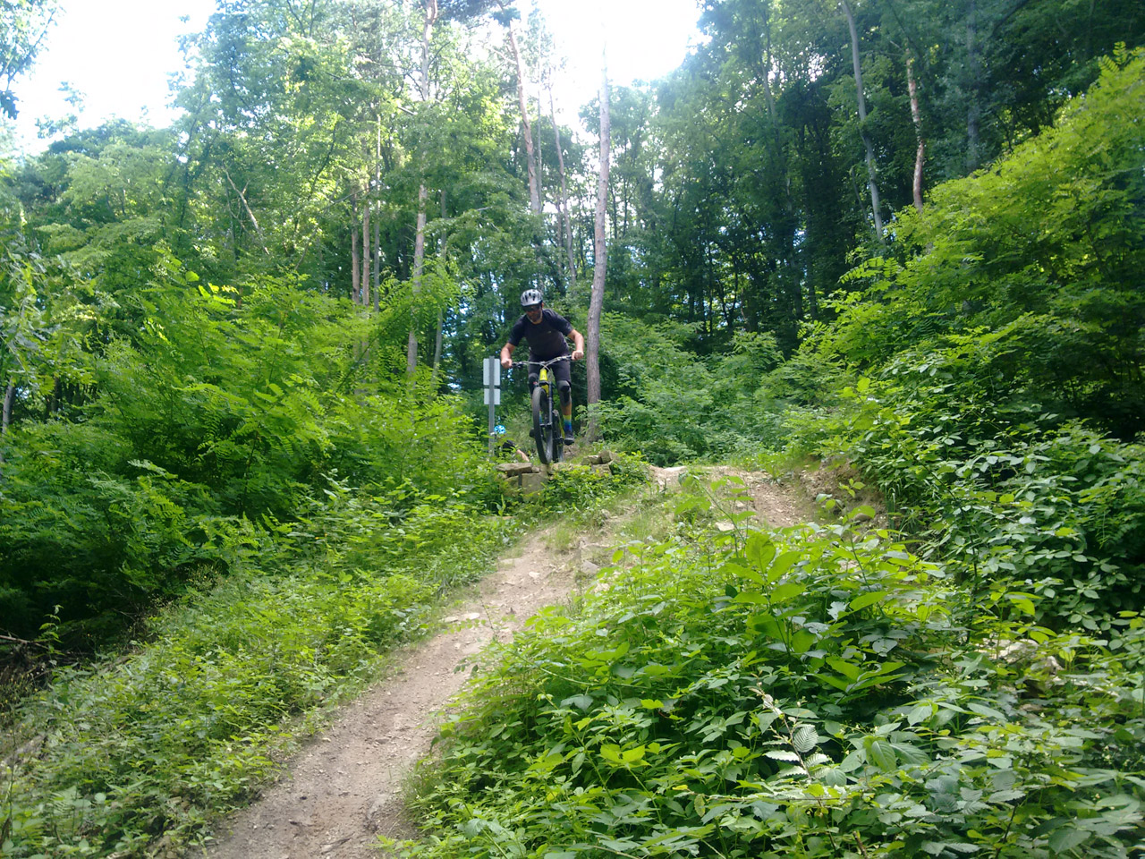 Mountainbiken am Göttweiger Berg