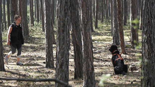 Hund Wald Naturschutzhund