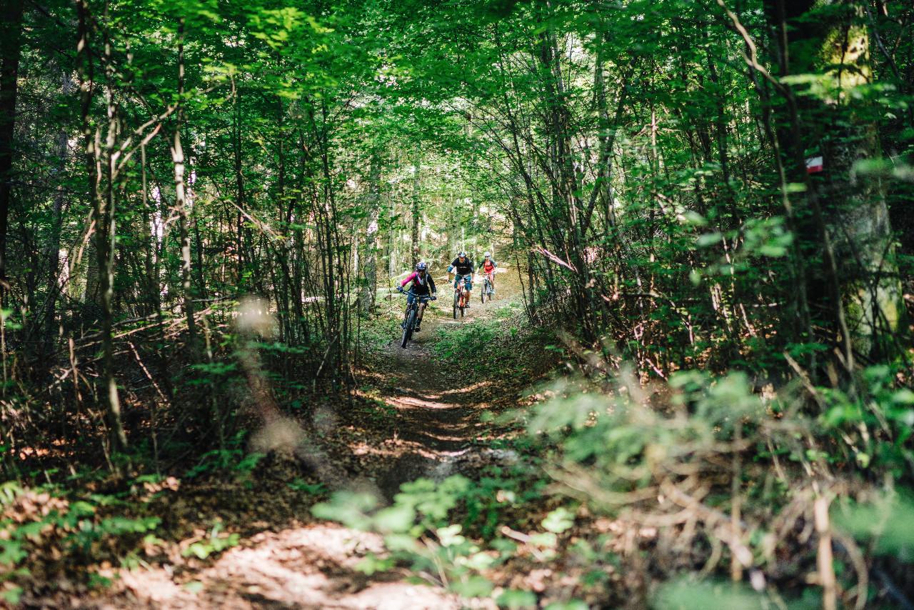 speeding through the forest