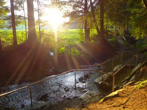 Ein Waldweg mit Bach und durch die Bäume scheinender Sonne
