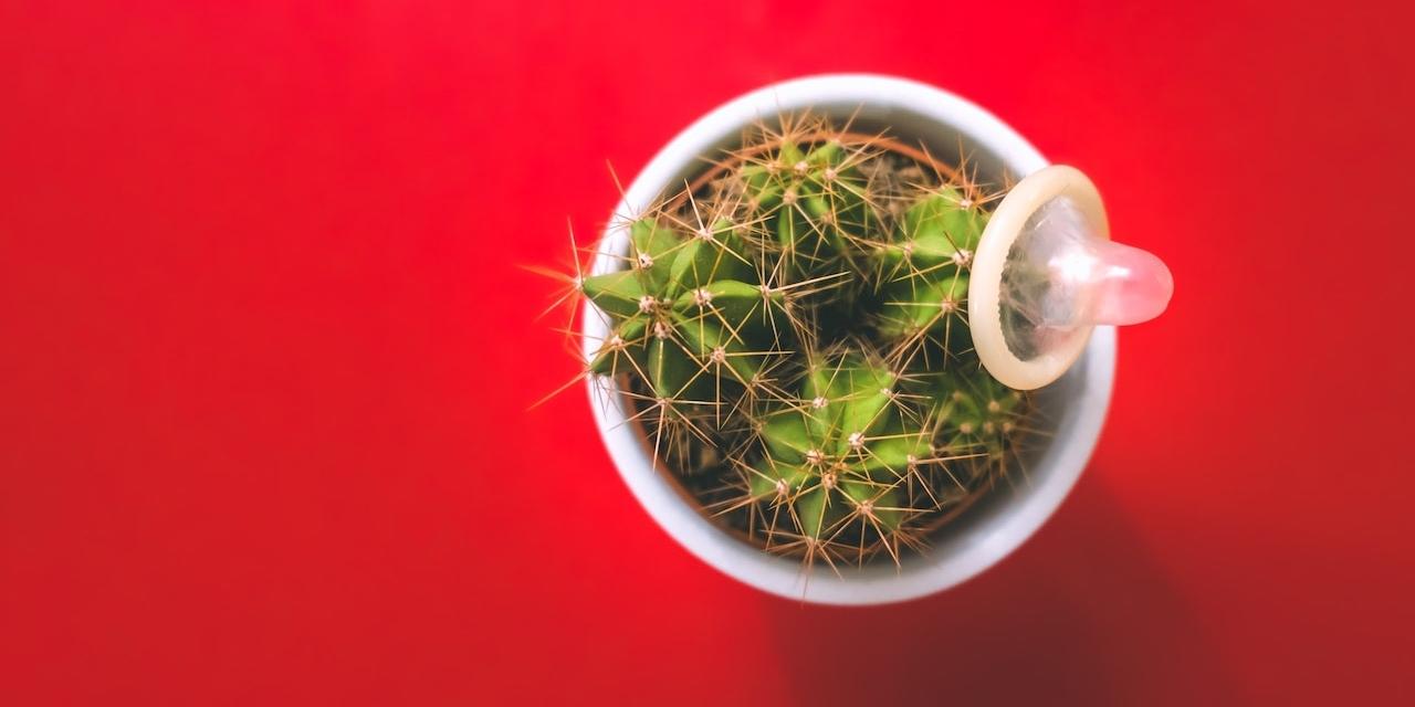 Kondom auf Kaktus auf rotem Untergrund