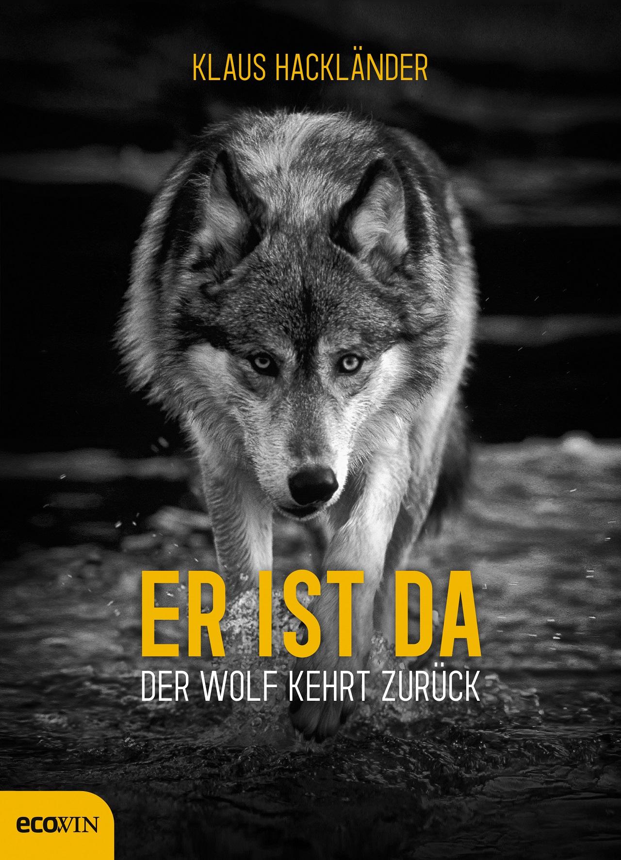"""Ein Wolf mit gesenktem Kopf, interessiert schauend, am Buchcover zu Klaus Hackländers """"Er ist da - Der Wolf kehrt zurück"""""""