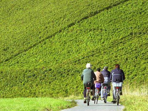 Rdfahrerinnen und Radfahrer auf einem Weg durch grüne Wiesen