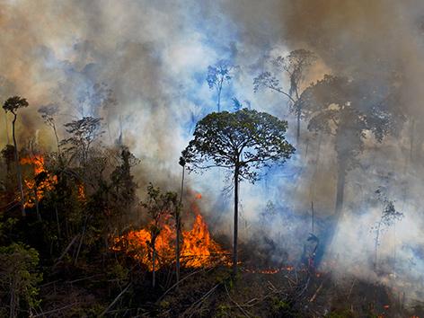 Brand im Regenwald im Bundesstaat Para, Brasilien