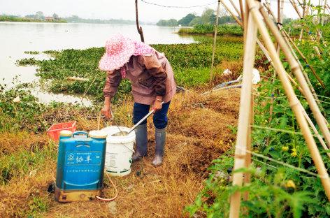 China in Dosen – Billige Lebensmittel aus