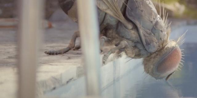 Riesenfliege trinkt aus einem Pool