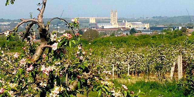 Bilder der Landschaft von Kent aus dem Lockdown