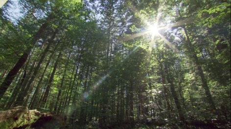 treffpunkt medizin  Der Wald als Heiler - Der Biophilia-Effekt