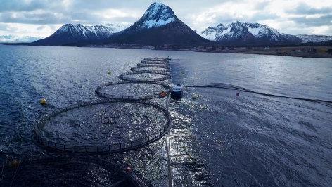 Die Lachsindustrie