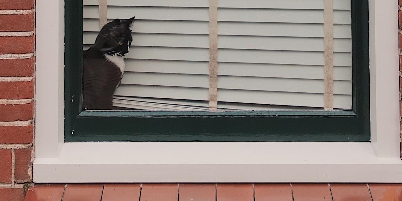 Katze im Lockdown