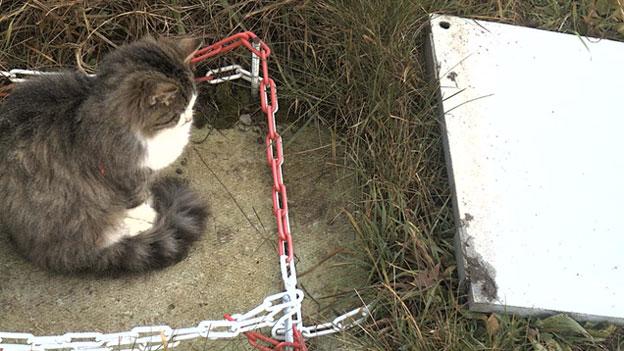 Katze sorgt bei der Ö3-Wetterstation in Krumbach für 24 cm Schnee