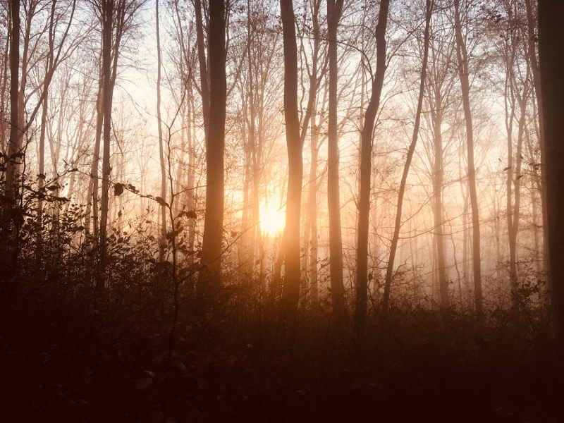 dawn in the woods