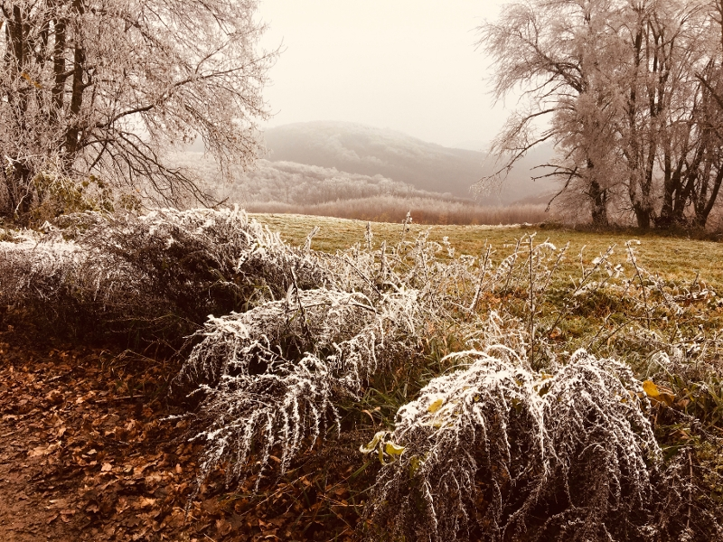 fores in winter