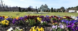 Blühende Frühlingsboten in Wien