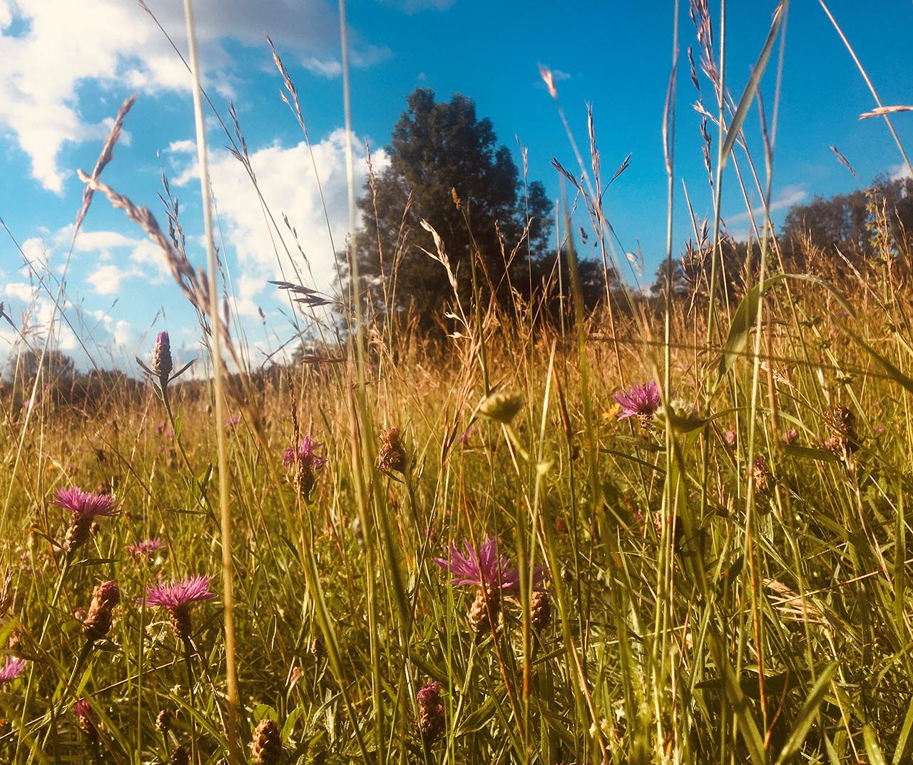 Biodiversität in der Natur