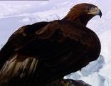 Tierwelt der Alpen Winter und Frühling Originaltitel: Tierwelt der Alpen (1/3)