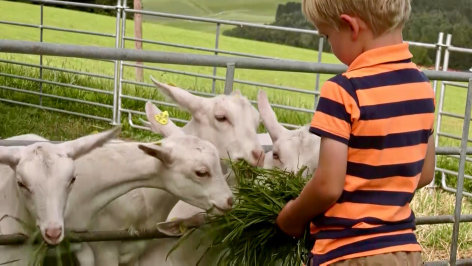 Bauernleben im Salzburger Seenland