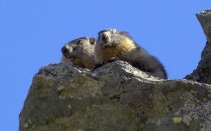 Tierwelt der Alpen<br /> Sommer<br /> Originaltitel: Tierwelt der Alpen (2/3)