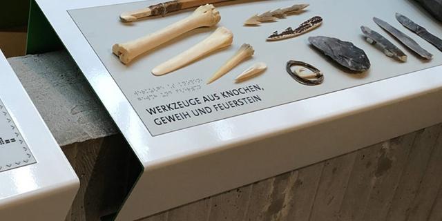 Tastexponate in der Daueraustellung des Neanderthal Museum Mettmann