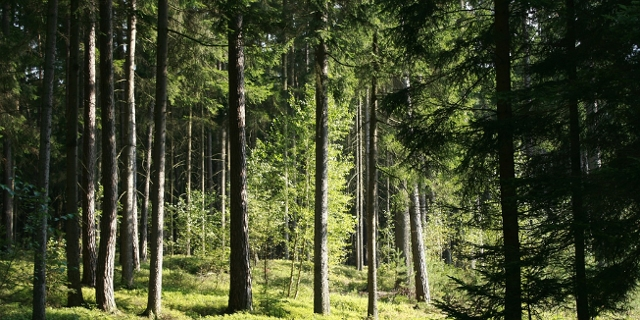 Wald/Lichtung