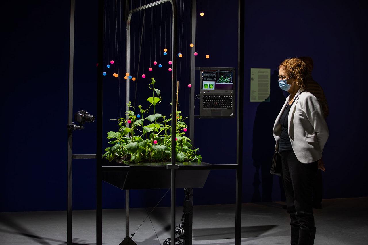 Plant Machine Project