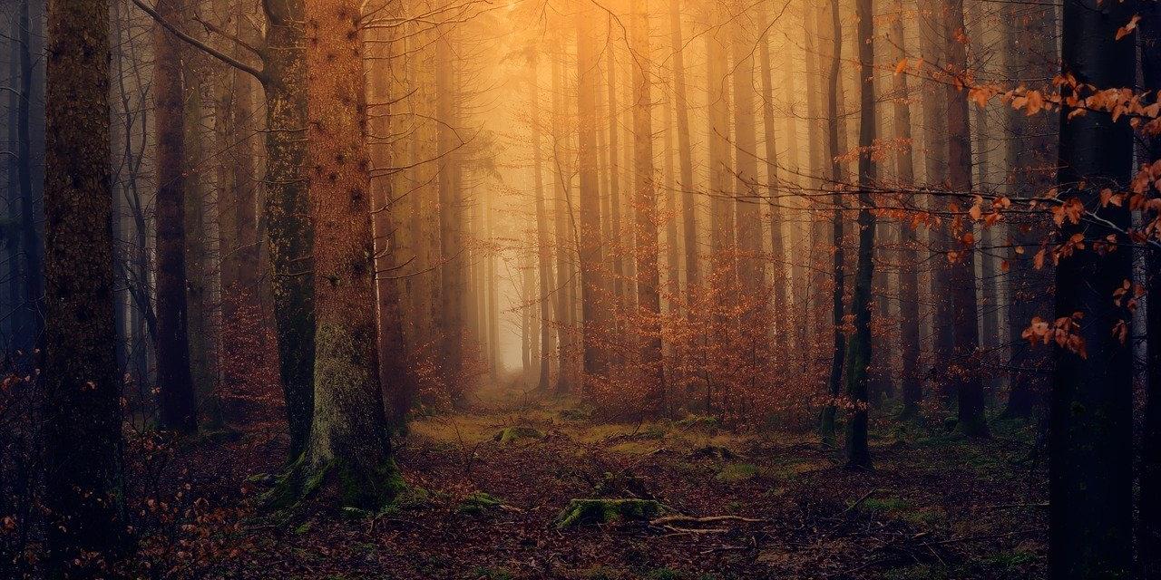 Nebelwald im Herbst