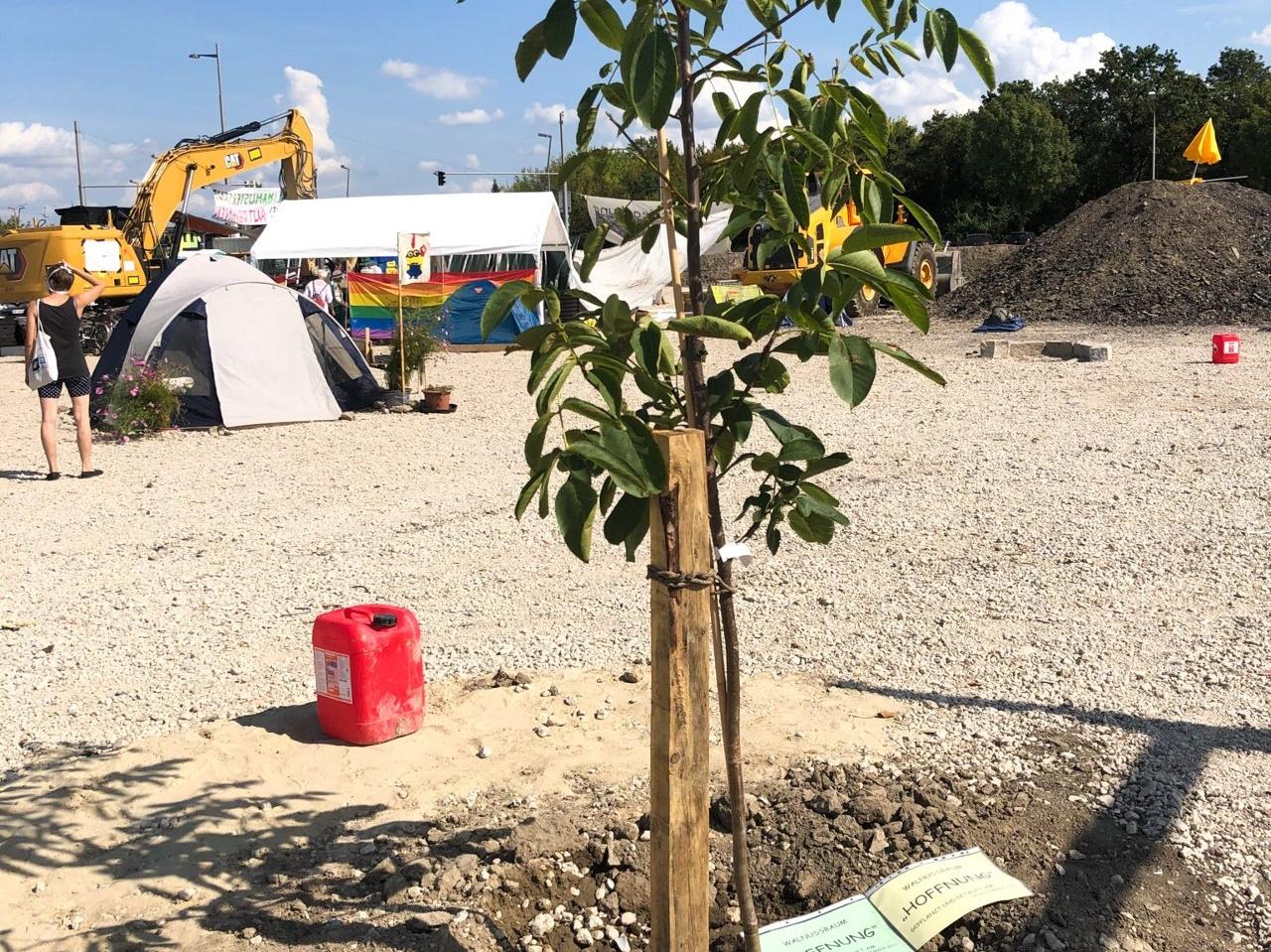 """Besetzte Baustelle, Baum der gepflanzt wurde namens """"Hoffnung"""""""