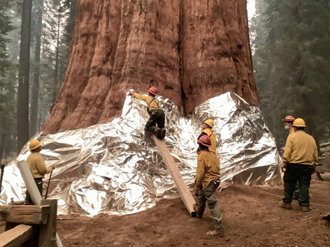 General Sherman, der größte Baum der Welt