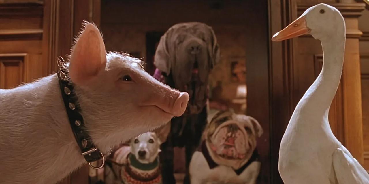 Schweinchen Babe und eine Gans