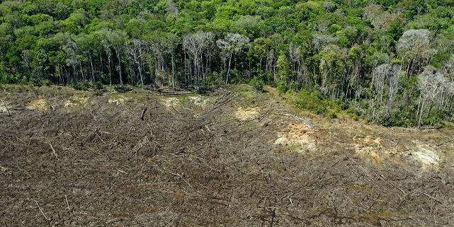 Abholzung des Regenwalds im Amazonas